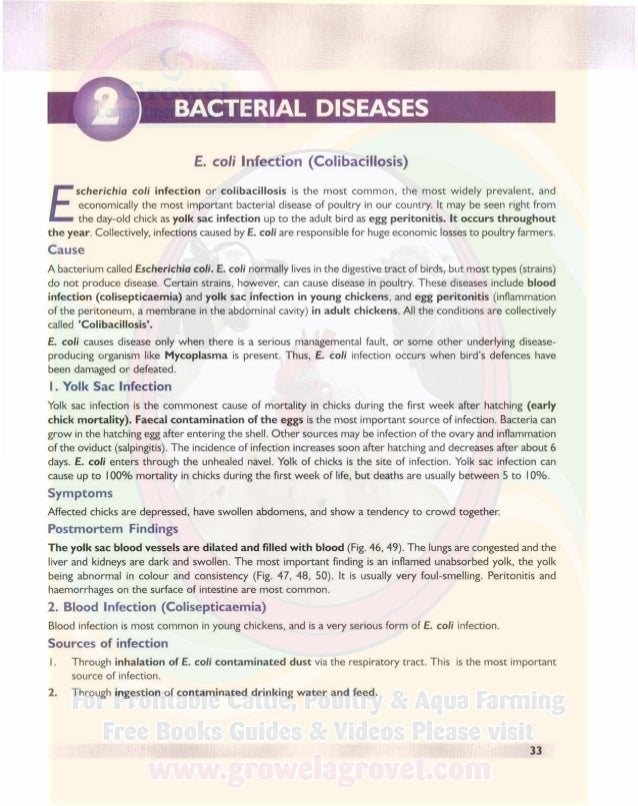 BACTERIAL DIS EASES A COLOUR ATLAS OF POULTRY DISEASES 3. E. coli can be found in litter and faecal matter. Dust in poultr...