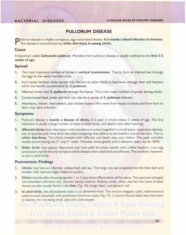 r...-_ _ _.....;BACTERIAL DISEASES A COLOUR ATLAS OF POULTRY DISEASES Diagnosis I. The symptoms and postmortem findings ma...