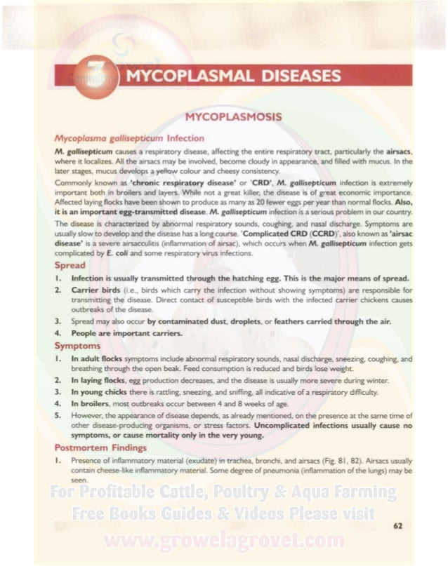 MYCOPLASMAL DISEASES A COLOUR ATLAS OF POULTRY DISEASES 2. In severe cases of airsac disease, thin or thick white layer of...