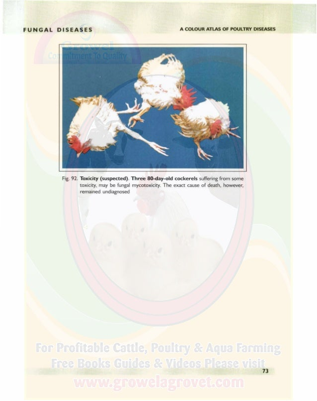 PARASITIC DISEASES ROUNDWORMS R oundworms are the most important worms of poultry. Among them, the large roundworm Ascarid...