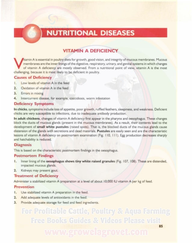 NUTRITIONAL DISEASES A COLOUR ATLAS OF POULTRY DISEASES Fig. I 10. Vitamin A deficiency in a chicken. Note distended, impa...