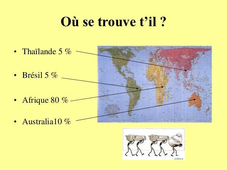 Où se trouve t'il ?• Thaïlande 5 %• Brésil 5 %• Afrique 80 %• Australia10 %