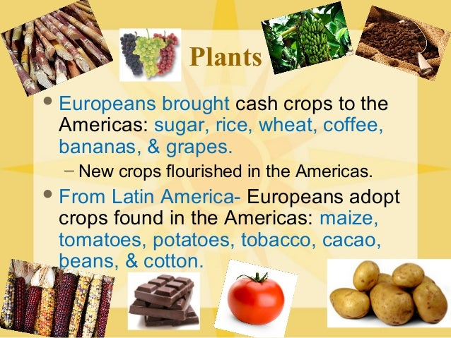 tobacco in the columbian exchange A major consequence of columbus's voyages was the eventual exchange of goods between the old world (europe) and the new world (the americas) listed below are some of the goods that were shared in this columbian exchange between the continents .