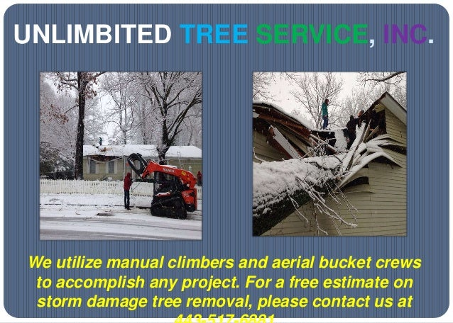 UNLIMBITED TREE SERVICE, INC. We utilize manual climbers and aerial bucket crews to accomplish any project. For a free est...