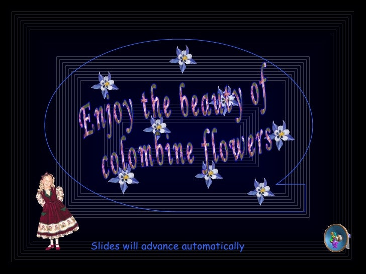 Enjoy the beauty of colombine flowers Slides will advance automatically