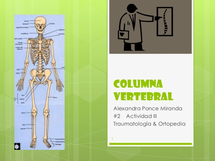 Columna    Vertebral    Alexandra Ponce Miranda    #2 Actividad III    Traumatología & Ortopedia1