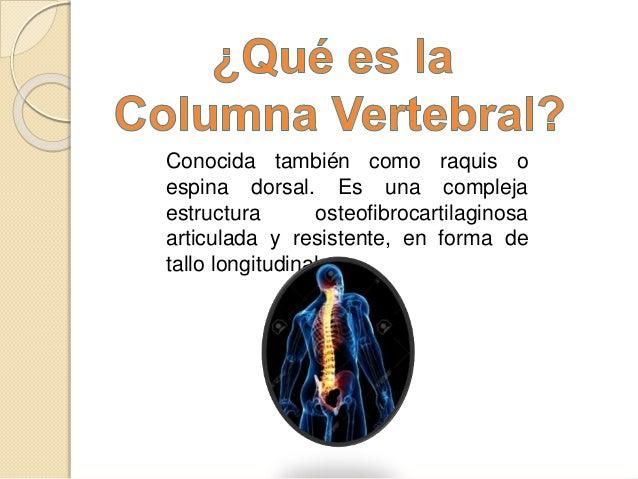 Columna vertebral-exposicion Slide 3