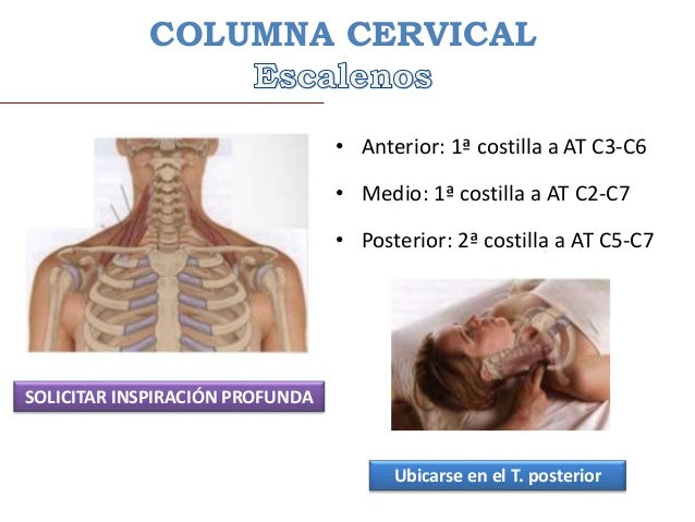 Anatomia Palpatoria de la Columna Vertebral