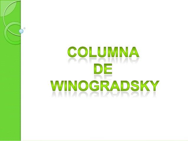 """La columna de Winogradsky es una demostración clásica de cómo los microorganismos ocupan """"microespacios"""" altamente específ..."""