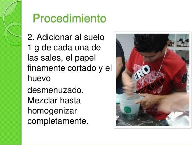 Procedimiento3. Colocar la mezcla en unrecipiente adecuado hastaocupar 1/3 del volumentotal. Compactarel suelo con la ayud...