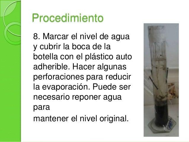 Después de incubar atemperatura ambiente(25 a 30°C) cerca de unaventana para que recibailuminación.Observar la columna yre...