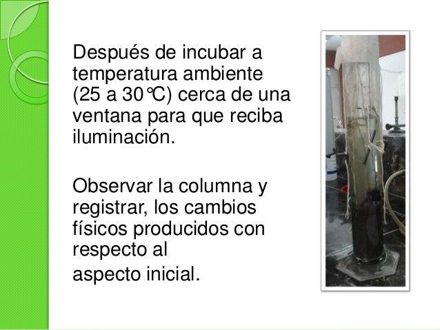 Primera SemanaEl niveldel aguadisminuyoEl nivelde Sueloaumento