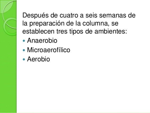 Ambiente AnaeróbicoSe localiza en el fondo de la columna endonde crecen dos tipos de organismos: losque fermentan la mater...