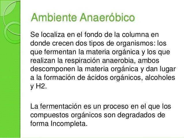 Ambiente MicroaerofilicoNo todo el H2S es utilizado, ciertascantidades se difunden hacia arriba a lo largode la columna de...