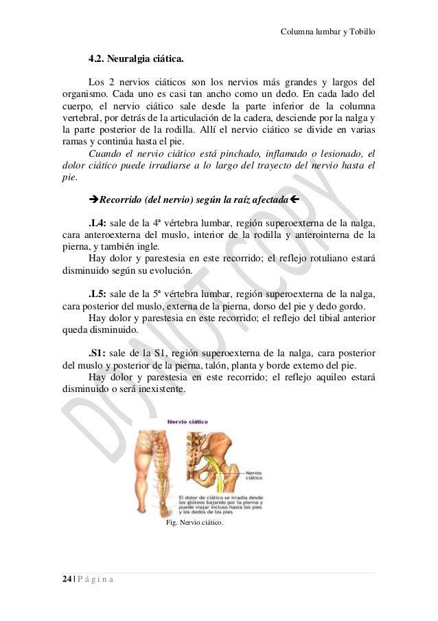 Columna lumbar y tobillo: Descripción anatómica, Lesiones en la colum…