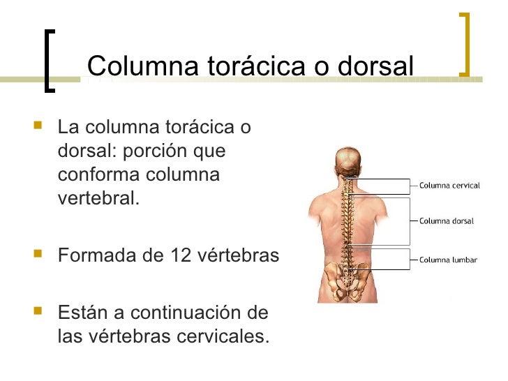 Columna Toracica