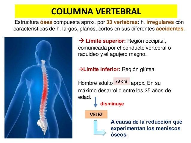 Columna vertebral-vertebra tipo