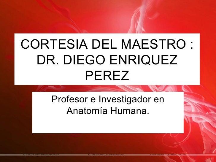 CORTESIA DEL MAESTRO :  DR. DIEGO ENRIQUEZ         PEREZ   Profesor e Investigador en      Anatomía Humana.
