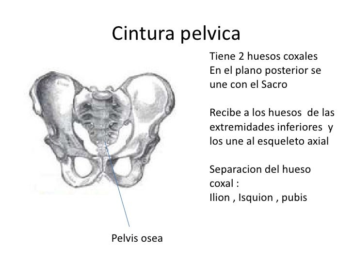 Columna vertebral torax costillas sacro y coxis