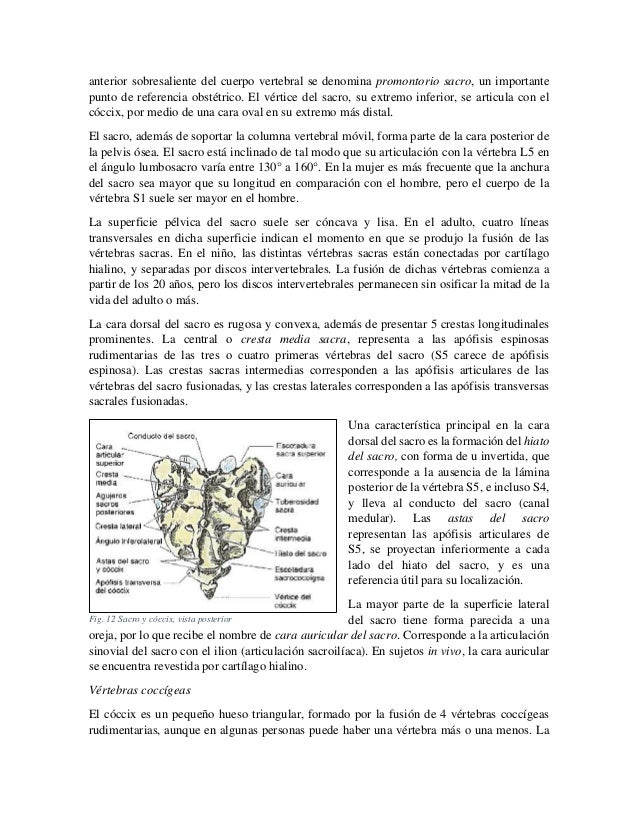 anterior sobresaliente del cuerpo vertebral se denomina promontorio sacro, un importante punto de referencia obstétrico. E...