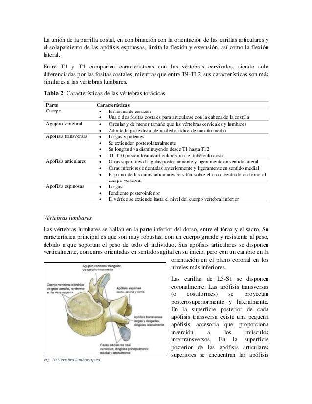 La unión de la parrilla costal, en combinación con la orientación de las carillas articulares y el solapamiento de las apó...