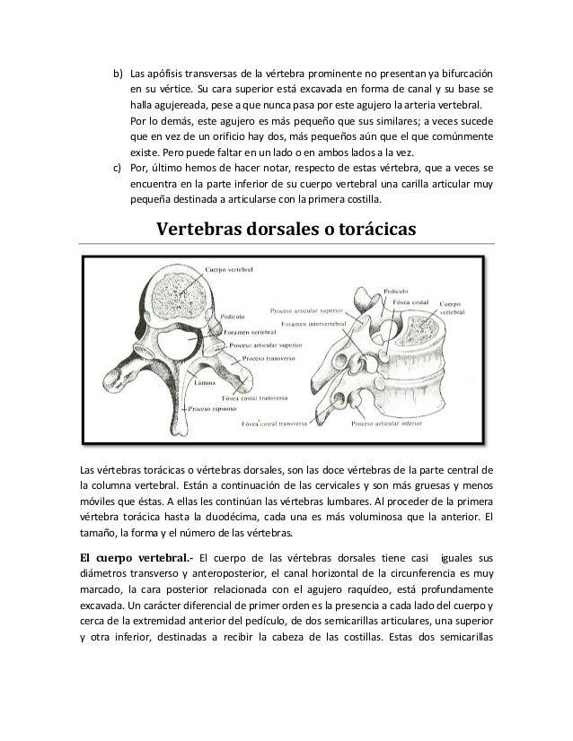 Columna y torax