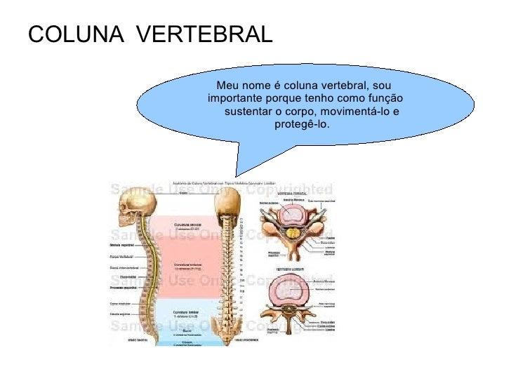 COLUNA  VERTEBRAL Meu nome é coluna vertebral, sou  importante porque tenho como função sustentar o corpo, movimentá-lo e ...