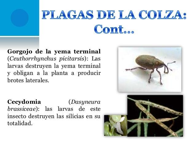 Como conocer el hongo o el magullado de la uña