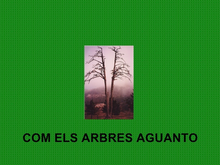 COM ELS ARBRES AGUANTO