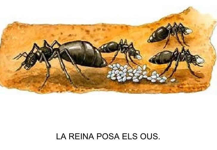 LA REINA POSA ELS OUS.