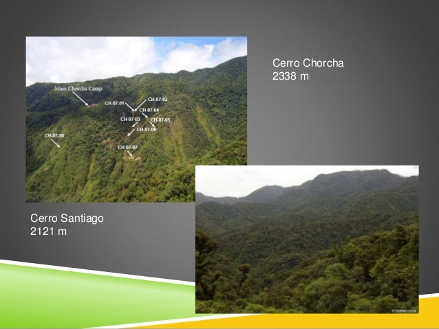 Clima 4 tipos de clima  Tropical muy húmedo  Tropical húmedo  Templado muy húmedo  Templado húmedo. Vegetación • Bosqu...