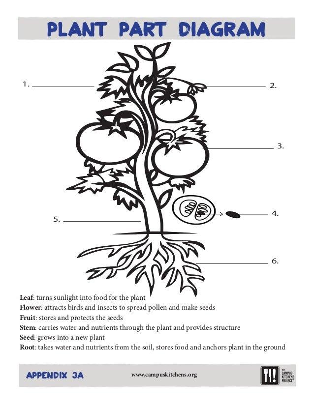 Parts-of-a-plant-worksheet & Plant Labeling Worksheet - Freebie ...