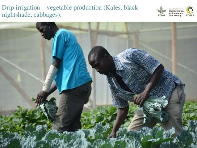 Youth involved in horticulture for income generation