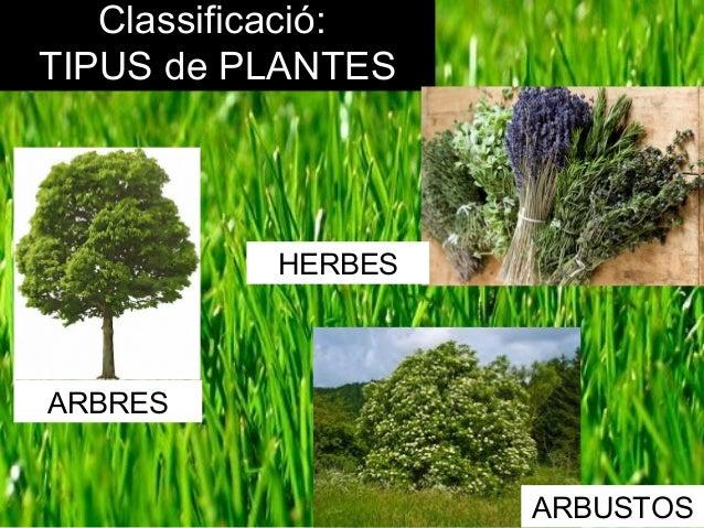 Com creixen les plantes for Les plantes