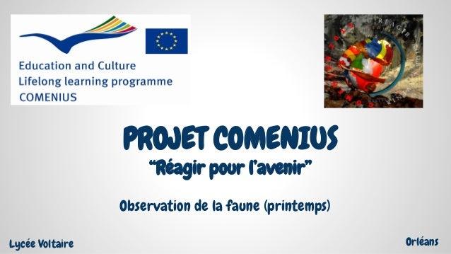 """PROJET COMENIUS """"Réagir pour l'avenir"""" Observation de la faune (printemps) Lycée Voltaire Orléans"""