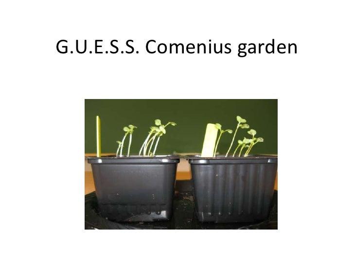 G.U.E.S.S. Comenius garden