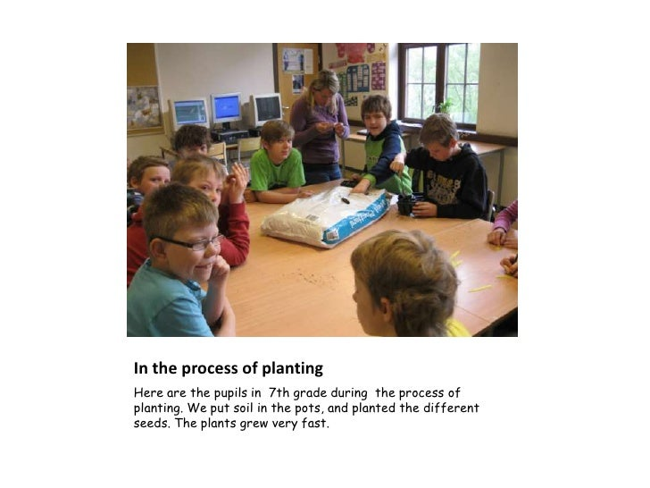 In the process of plantingHere are the pupils in 7th grade during the process ofplanting. We put soil in the pots, and pla...