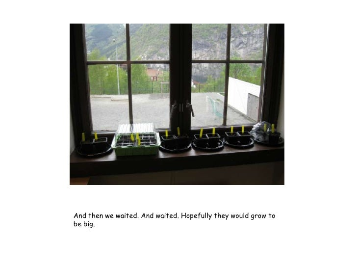 And then we waited. And waited. Hopefully they would grow tobe big.