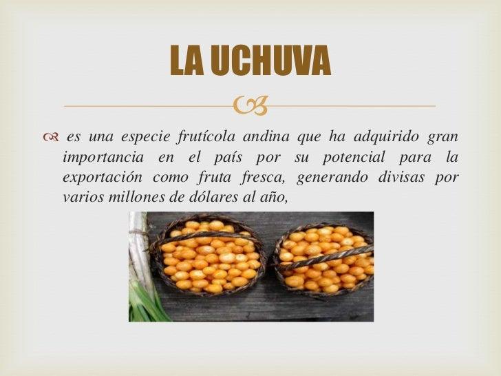 LA UCHUVA                     es una especie frutícola andina que ha adquirido gran importancia en el país por su potenc...