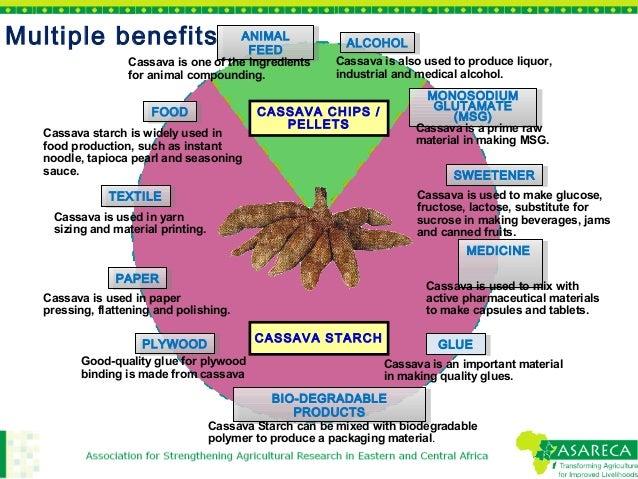 Cassava starch problems essay
