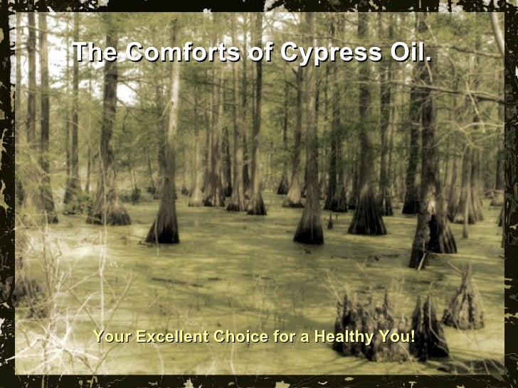 The Comforts of Cypress Oil.  Your Excellent Choice for a Healthy You!