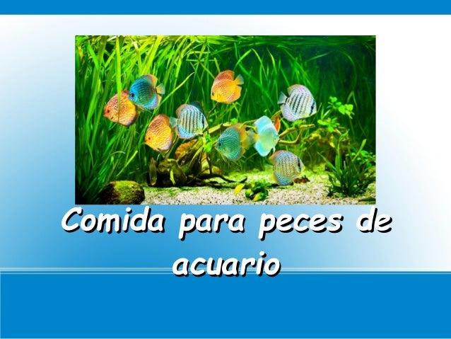 Comida para peces de acuario for Comida para peces