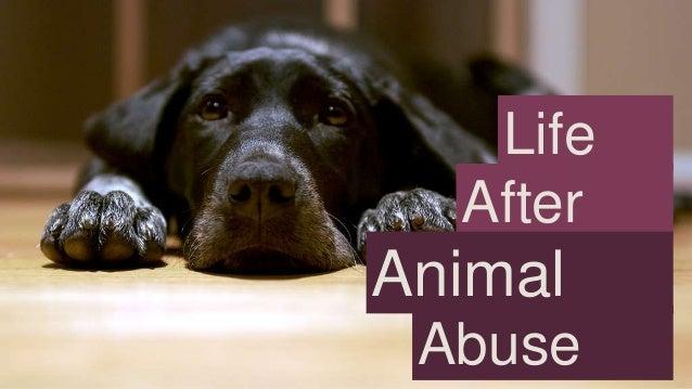 Life After  Animal Abuse