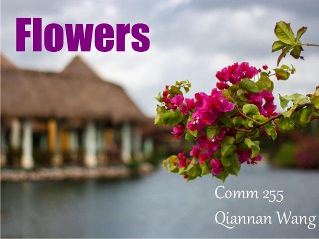 Flowers Comm 255 Qiannan Wang
