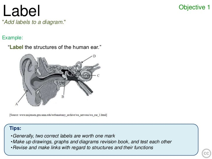 """Objective 1Label""""Add labels to a diagram.""""Example:  """"Label the structures of the human ear.""""   Tips:   •Generally, two cor..."""