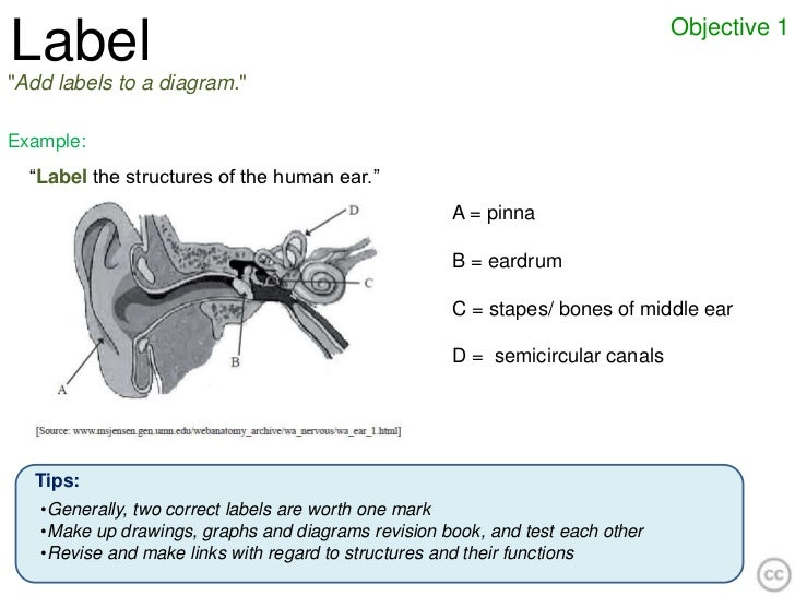 """Objective 1Label""""Add labels to a diagram.""""Example:  """"Label the structures of the human ear.""""                              ..."""