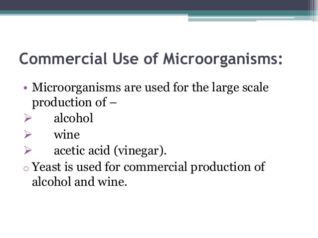 usefulness of microorganisms in our lives