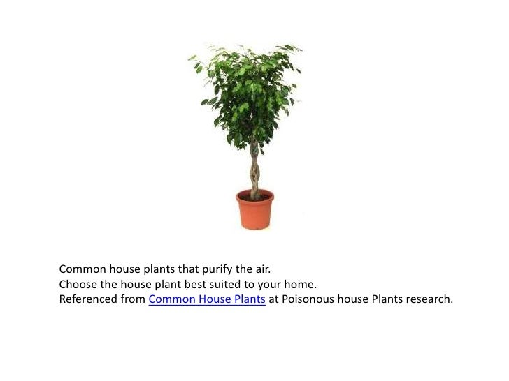 Common house plants that purify the air.Choose the house plant best suited to your home.Referenced from Common House Plant...