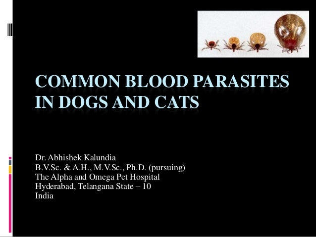 Will Dog Blood Sample Show Parasites