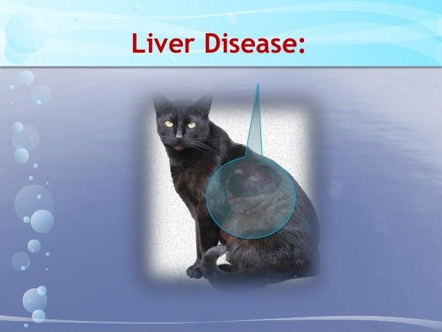 Common Diseases Of Geriatric Cats